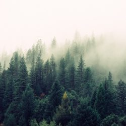 Trees, Forests and the Relation to Water Scarcity